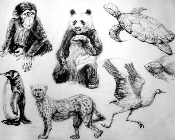 动物素描写生